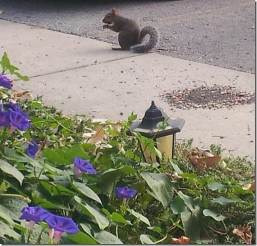 Squirrel Put in a Good Word for Me 1