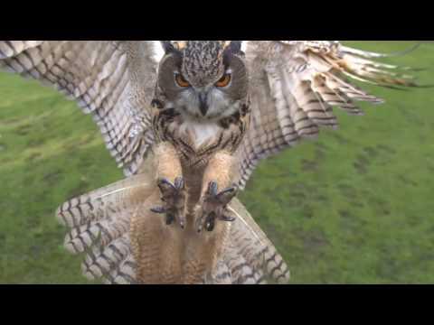 Whoooo Whoooo - Owls! 1