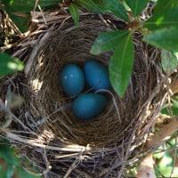 Robin's Eggs Spirit Totem