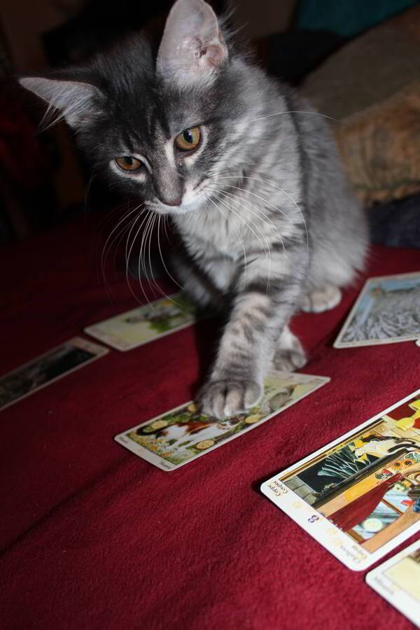 Heart and Brain: Weekly Flow Tarot, Aug. 30 - Sept. 5, 2015 1