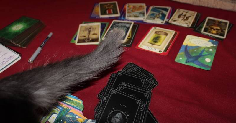 Playing that Hand: Weekly Tarot Forecast, Oct 12 - 18 1
