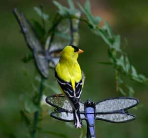 Signs in Real Life: Goldfinch Mobs & Missed Blessings