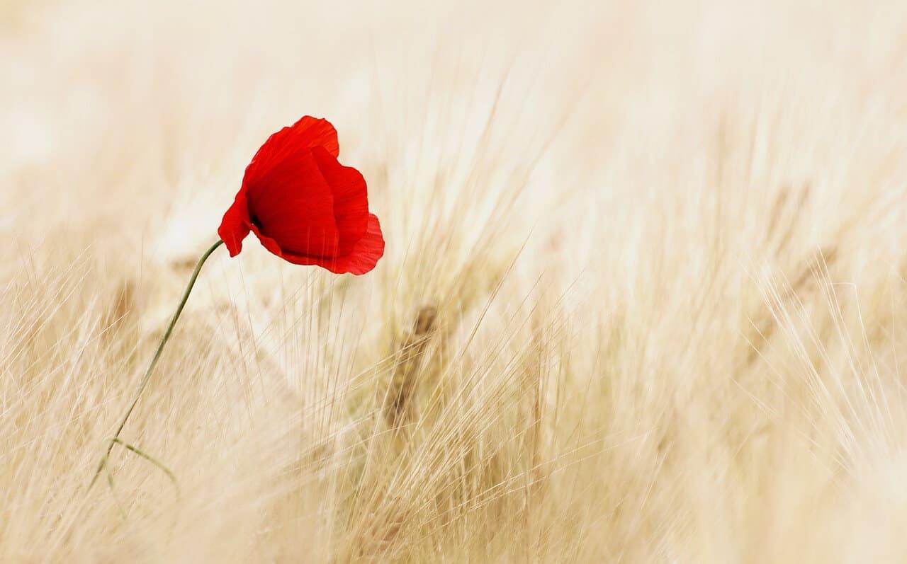 Seven of Pentacles: Tending Your Personal Garden 1