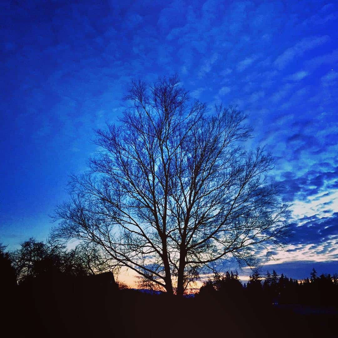 Tree by Rob Hooper
