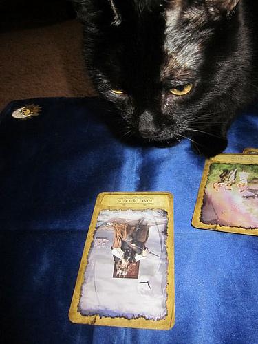 Jewels the Tarot Kitty